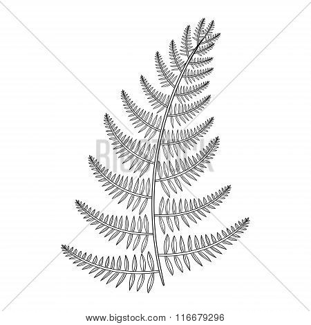 Zentangle vector male Fern for tattoo in boho, hipster style. Or