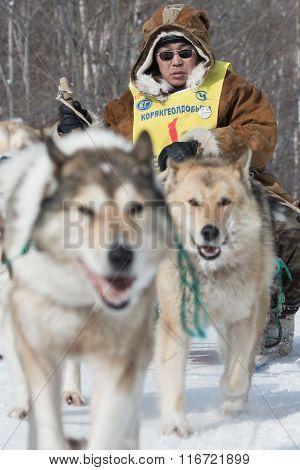 Kamchatka Extreme Dog Sled Racing Beringia. Russia, Far East. Kamchatka Peninsula