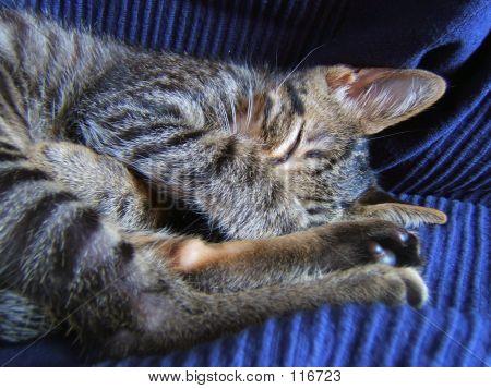 poster of cat pet against blue sofa
