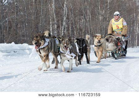 Kamchatka Dog Sledge Race Beringia. Russian Far East, Kamchatka Peninsula