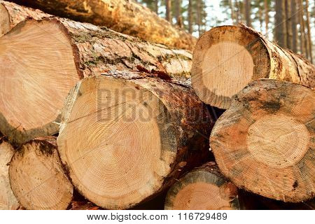Cut round tree stump pattern. Industrial firewood.