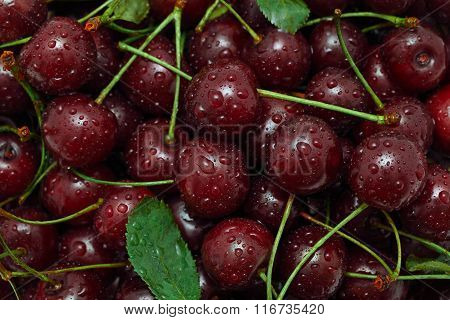 Ripe Cherry And Green Leaves With Water Drops