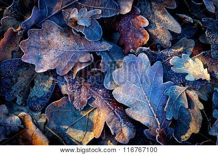 nice autumn leafs with frost - abstract background