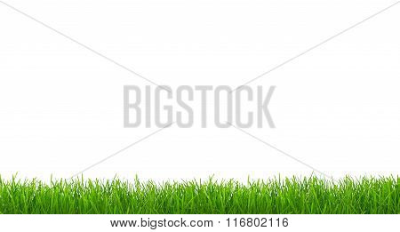 Panorama Of Grass Isolated