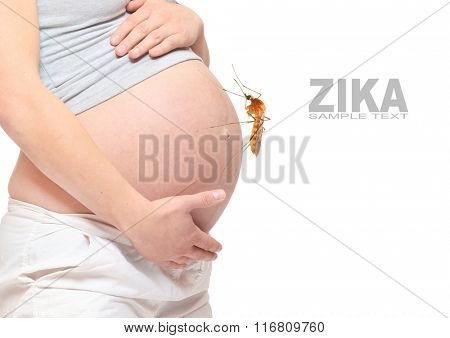 Pregnant belly with big mosquito. Zika infection control concept. Picture with space for your text.