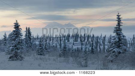 Mountain Tundra Landscape With Mt Denali