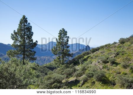 Gran Canaria Caldera de Tejeda turning green in January poster