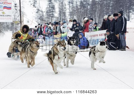 Kamchatka Sled Dog Racing. Russia, Far East, Kamchatsky Krai