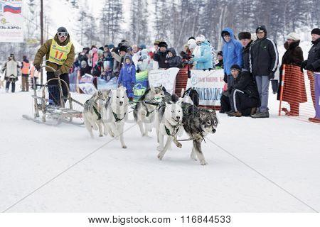 Kamchatka Sled Dog Race. Russian Far East, Kamchatsky Krai