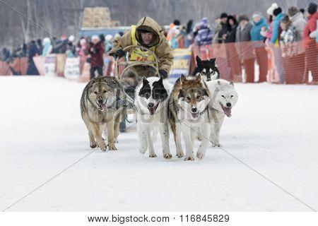 Kamchatka Dog Sledge Race Beringia. Russia, Far East, Kamchatsky Krai