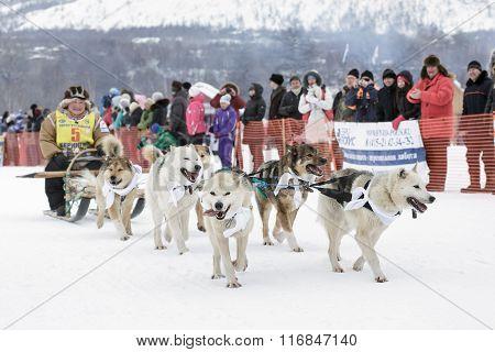 Kamchatka Sledge Dog Race Beringia. Russia, Far East, Kamchatsky Krai