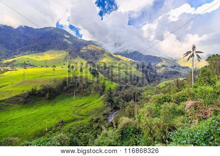 green jungle mountains with palm trees