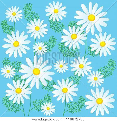 Chamomile Flowers On A Blue Background. Seamless Vector Illustrations. Chamomile Flowers For Sale. Chamomile Flowers Organic. Chamomile Plant. Chamomile Flowers. Chamomile Lawn. Chamomile Classics.