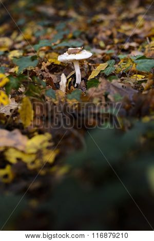 Mushrooms In The Undergrowth
