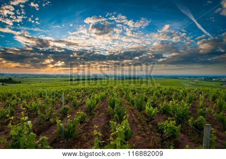 Sunrise time over vineyards of Beaujolais, France