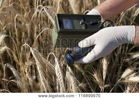 Measuring radiation levels of wheat