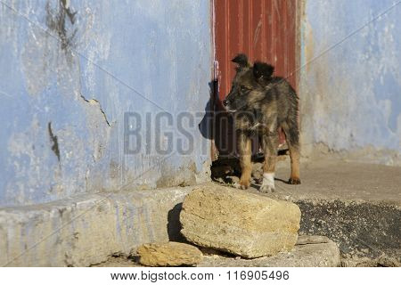 Puppy On The Doorstep