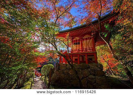 Colorful Tree Leaves Around Daigoji Temple,  Kyoto