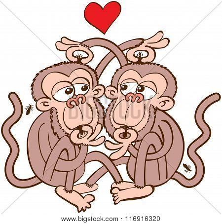 Couple of monkeys in love delousing each other