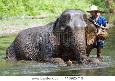 Mahoots And Elephants