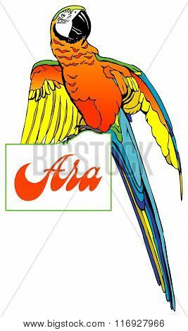 Macaw On The Plate