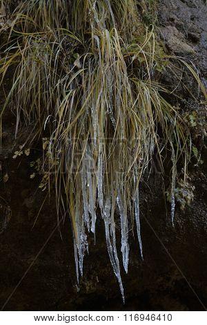 icy weeds