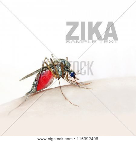 Sucking mosquito, dangerous vehicle of zika, dengue, chikungunya, malaria and other infections. Digital artwork on healthcare theme. Picture with space for your text.