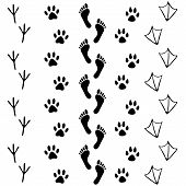 Vector set of human and animal bird footprints icon. Collection of bare human foots cat dog bird chicken hen crow duck footprint. Design for frames invitation and greeting cards poster