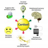 Cortisol Functions. Cortisol is released in response to stress and low blood-glucose concentration. poster