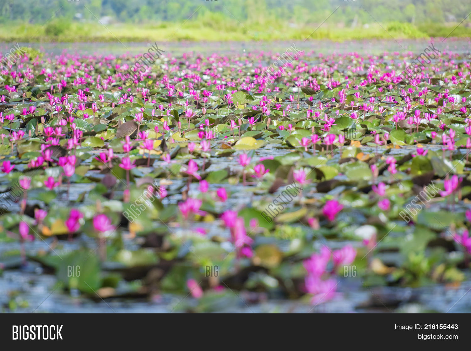Picture Beautiful Image Photo Free Trial Bigstock