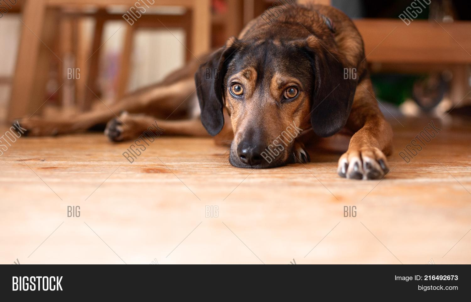 43a39916fec Brown dog laying down on the wooden surface ground