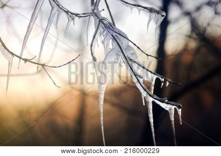 Icy Tree Branch On A Cold Winter Day
