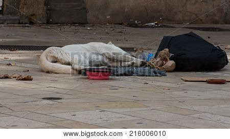 A homeless emaciated dog sleeping on the sidewalk and wearing a chain leash. An empty food dish is in front of the dog and a dish for money and black backpack are near her. She is s