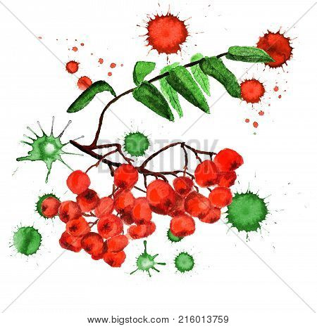 Watercolor Image Of Rowan With Paint Blots On White Background