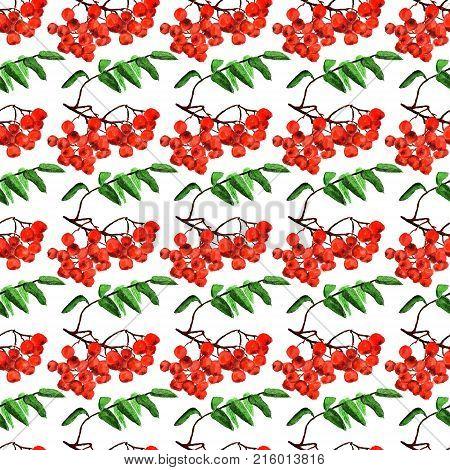 Seamless Pattern With Rowan