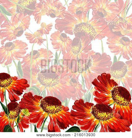 Flowers Of Rudbekia
