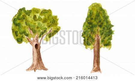 Watercolor Image Of Two Trees On White Background