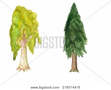 Watercolor Image Of Birch And Firtree On White Background