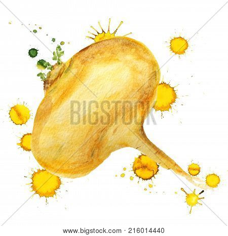 Watercolor Image Of Raw Yellow Turnip With Paint Blots On White Background