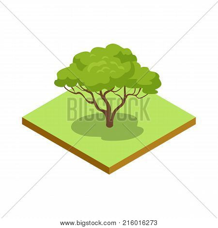 Green decorative tree isometric 3D icon. Public park plant and green grass vector illustration. Nature map element for summer parkland landscape design.