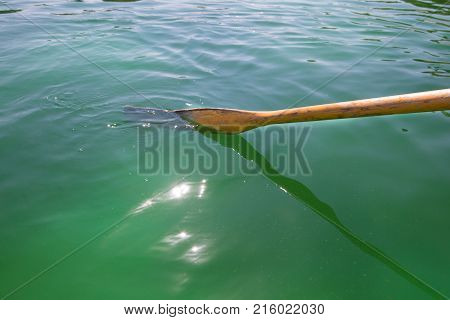 A wooden oar in the green water of a lake rowing