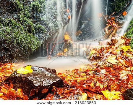 Colorful Leaves Caught In Mountain River, Autumn Colors In Stream. Wave Over Mossy Stone