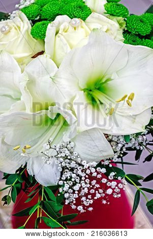 White Amaryllis and roses in a red vase