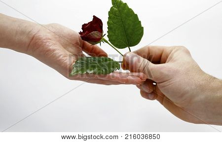 Hands Of Lovers Photo