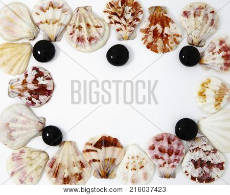 Sea Cockleshells Photo