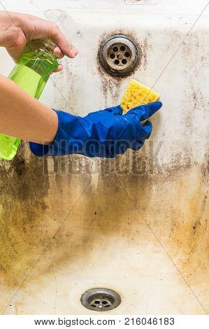 Hands in blue rubber worker hand gloves hold sponge and spray with detergent clean bath tub covered in fungus, dirt and mold. Cleaning dirty old bathtub with corrosion and mould with detersive