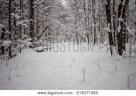 Lonely Dark Winter Forest Path. Diminishing snow covered trail through a remote, dark and shadowy forest.