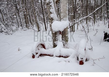Winter Garden. Winter garden with snow and antique farm plow as décor and snow covered forest in the background.