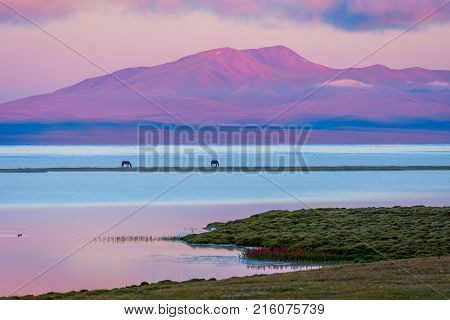 Song Kul Lake With Horses In Sunrise