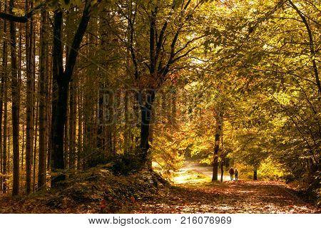 ormanda sarı yapraklar arasında gezen bir çift